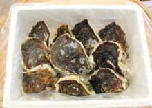 超極濃 岩牡蠣 10個入