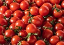 特別栽培「宮トマト」2㎏